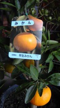DSC07336.JPG